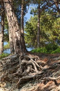 Kampen mellan hem och natur